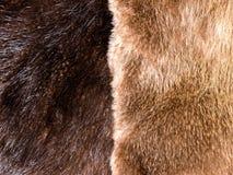 abstrakcjonistycznego tła zakończenia futerkowa tekstura futerkowy Fotografia Royalty Free