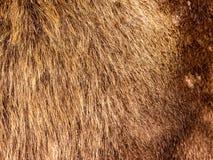 abstrakcjonistycznego tła zakończenia futerkowa tekstura futerkowy Fotografia Stock