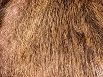 abstrakcjonistycznego tła zakończenia futerkowa tekstura futerkowy Zdjęcie Royalty Free