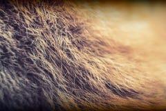 abstrakcjonistycznego tła zakończenia futerkowa tekstura futerkowy Obraz Royalty Free