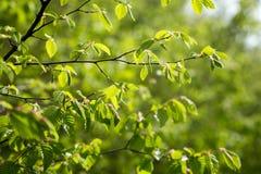 abstrakcjonistycznego tła zbliżenia zieleni liść naturalna tekstura z bliska Obrazy Stock