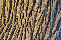 abstrakcjonistycznego tło kory dąb projektu Obrazy Royalty Free