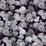 abstrakcjonistycznego tła kwiecisty wzór Zdjęcie Royalty Free