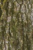 abstrakcjonistycznego tło kory dąb projektu Obrazy Stock