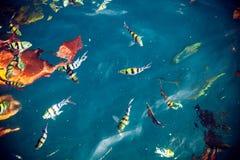 Abstrakcjonistycznego unfocus denny kolorowy tło z różnymi ryba Zdjęcia Stock