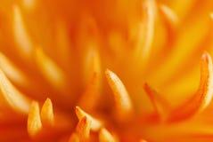 abstrakcjonistycznego zamkniętego kwiatu pomarańczowa fotografia pomarańczowy Obraz Stock