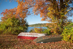 abstrakcjonistycznej jesienią jaskrawe kolory są czerwone liść ładna wzoru semi Zdjęcie Royalty Free