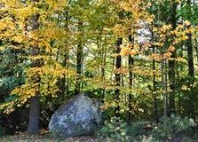 abstrakcjonistycznej jesienią jaskrawe kolory są czerwone liść ładna wzoru semi Zdjęcia Royalty Free