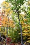 abstrakcjonistycznej jesienią jaskrawe kolory są czerwone liść ładna wzoru semi Fotografia Stock