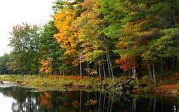 abstrakcjonistycznej jesienią jaskrawe kolory są czerwone liść ładna wzoru semi Zdjęcie Stock