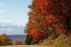 abstrakcjonistycznej jesienią jaskrawe kolory są czerwone liść ładna wzoru semi Obraz Royalty Free