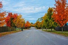 abstrakcjonistycznej jesienią jaskrawe kolory są czerwone liść ładna wzoru semi Obrazy Royalty Free