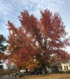 abstrakcjonistycznej jesienią jaskrawe kolory są czerwone liść ładna wzoru semi fotografia royalty free
