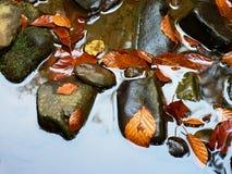 abstrakcjonistycznej jesienią jaskrawe kolory są czerwone liść ładna wzoru semi Szczegół przegnili starzy liście na bazaltowym żw Zdjęcia Stock