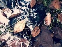 abstrakcjonistycznej jesienią jaskrawe kolory są czerwone liść ładna wzoru semi Żwir przy halną rzeką zakrywającą z jesiennymi li Obraz Stock