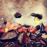 abstrakcjonistycznej jesienią jaskrawe kolory są czerwone liść ładna wzoru semi Żwir przy halną rzeką zakrywającą z jesiennymi li Zdjęcia Royalty Free