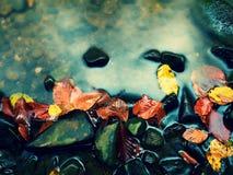 abstrakcjonistycznej jesienią jaskrawe kolory są czerwone liść ładna wzoru semi Żwir przy halną rzeką zakrywającą z jesiennymi li Zdjęcia Stock
