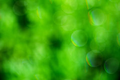 Abstrakcjonistycznej lato zieleni bokeh zamazany tło Obraz Stock
