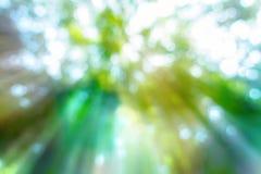 abstrakcjonistycznej plamy zieleni bokeh natury lasowy tło z effet e Obrazy Royalty Free