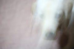 Abstrakcjonistycznej ruch fotografii szczeniaka Działający pies dla tła Zdjęcia Royalty Free