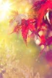 abstrakcjonistycznej sztuki jesień tło Obrazy Stock
