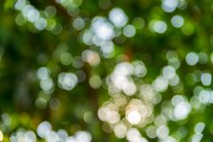 Abstrakcjonistyczni bokeh ?wiat?a zielony li?? fotografia royalty free