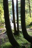 abstrakcjonistyczni drzewa obrazy royalty free