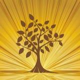 Abstrakcjonistyczni drzewni whit promienie. Obrazy Royalty Free