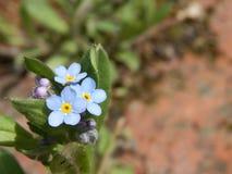Abstrakcjonistyczni Dzicy WildFlowers kwiatu kwiaty obraz stock