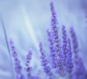 Abstrakcjonistyczni fiołków kwiaty Zdjęcie Stock