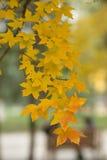 abstrakcjonistyczni jesień tła liść Obrazy Stock