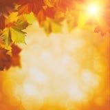 Abstrakcjonistyczni jesienni tła Obraz Stock