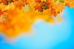 Abstrakcjonistyczni jesienni tła Fotografia Royalty Free
