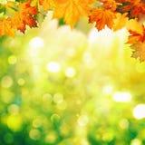 Abstrakcjonistyczni jesienni tła Obrazy Royalty Free