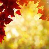 Abstrakcjonistyczni jesienni tła Zdjęcie Royalty Free