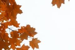 Abstrakcjonistyczni jesienni tła dla twój projekta Obrazy Stock