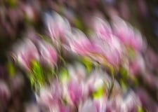 Abstrakcjonistyczni magnolia kwiaty Zdjęcia Royalty Free