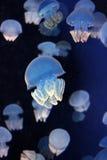 abstrakcjonistyczni meduz. Fotografia Royalty Free