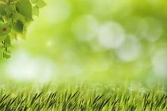 Abstrakcjonistyczni naturalni tła z zieloną trawą Fotografia Stock