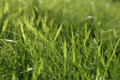 Abstrakcjonistyczni naturalni tła na zielonej trawie Obraz Stock