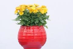 abstrakcjonistyczni tła chryzantemy koloru kwiaty Zdjęcie Royalty Free
