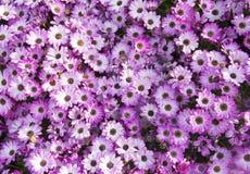 abstrakcjonistyczni tło kwiaty obrazy stock