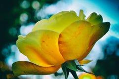 abstrakcjonistyczni tło kwiaty Zakończenie rocznik retro fotografia stock