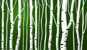 abstrakcjonistyczni tła brzozy trzony Zdjęcia Royalty Free