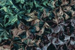 abstrakcjonistyczni tło kwiaty Obrazy Royalty Free