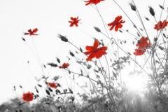 Abstrakcjonistyczni wiosna kwiaty Fotografia Royalty Free