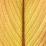 Abstrakcjonistyczny żółty liść wykłada tło teksturę Obraz Royalty Free