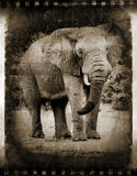 Abstrakcjonistyczny Afrykański słoń obrazy royalty free