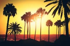 Abstrakcjonistyczny backlit palmy t?o zdjęcie royalty free