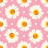 Abstrakcjonistyczny bezszwowy chamomile wzór na różowym tle Zdjęcie Stock
